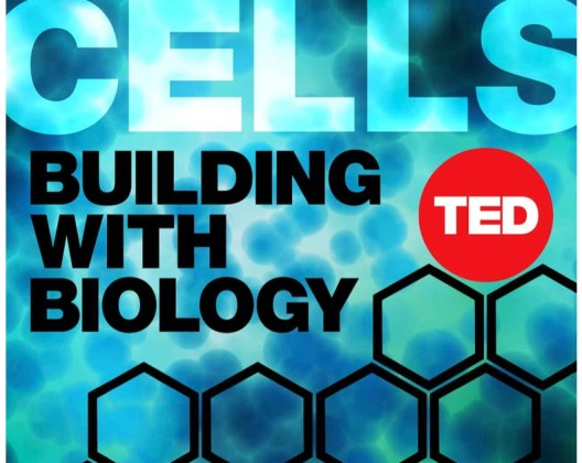 super-cells-building-biology